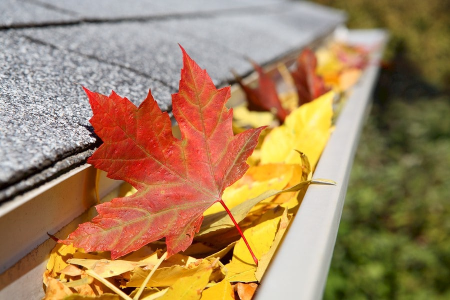 Fall Leaves in gutter trough